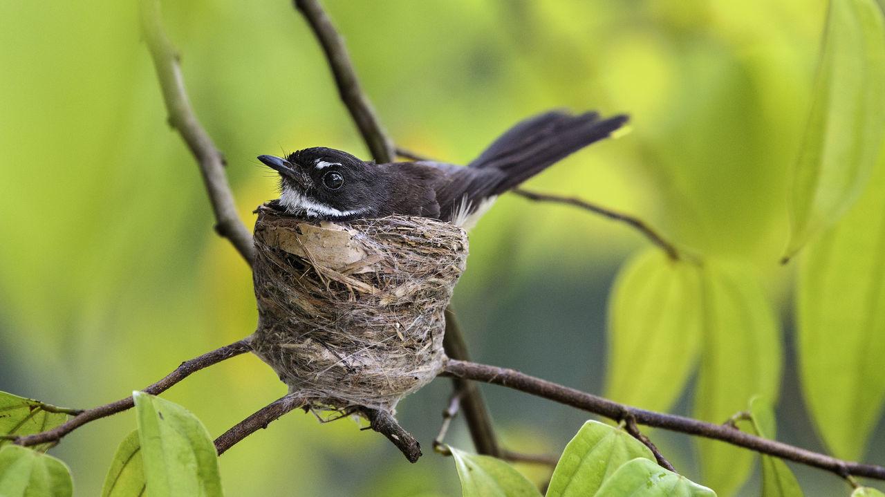 Close-Up Of Bird In Nest