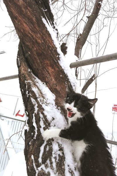 Tree No People Hanging Sky Branch Low Angle View Tree Trunk Nature One Animal Outdoors Pets Day Edited By @wolfzuachis On Market Cat Veronicaionita Eyeem Market Showcase: January Wolfzuachiv Huaweiphotography Showcase: 2017 Cats Of EyeEm Snow Snowing EyeEmNewHere Resist