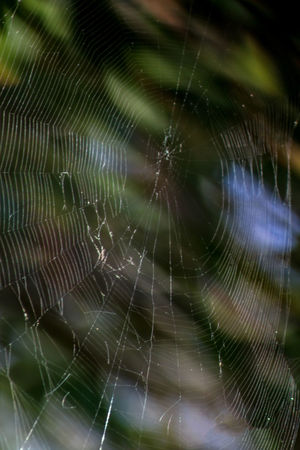 spider web Animal Themes Backgrounds Beauty In Nature Close-up Complexity Day Focus On Foreground Fragility Full Frame Intricacy Nature No People One Animal Outdoors Spider Spider Web Spider Web, Dew, Morning, Web