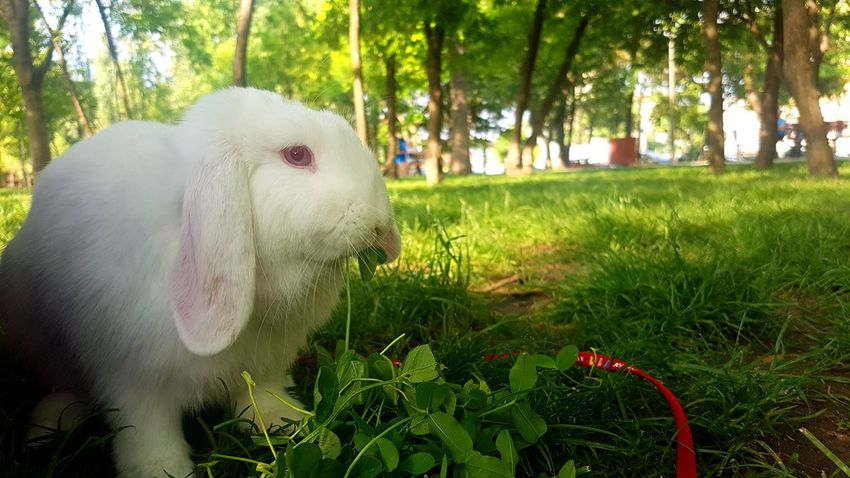 Rabbits 🐇 Mammal Nature Tree Animal Themes No People Pets Day Domestic Animals One Animal Outdoors Grass Close-up Forest Park Tranquil Scene NoEditNoFilter Green Color Calm Freshness Beauty In Nature