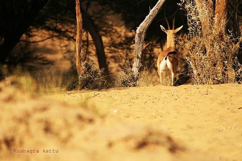 Drop the guns and hold a camera.....Its much more fun Jaiselmerdiaries Deer Photography_addict