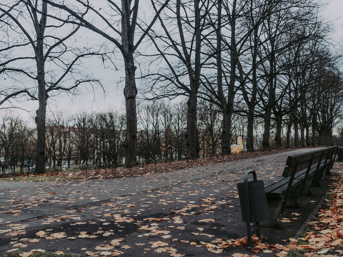 Empty bench by bare trees in park during autumn