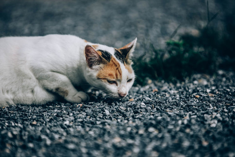 Cat resting on road