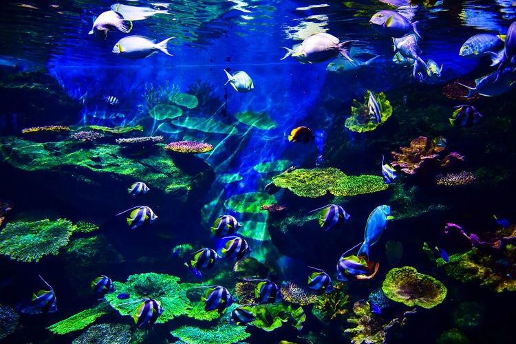 Underwater life landscape. Fish shoal at coral reef in aquarium Aquarium Aquatic Animal Animal Themes Animal Wildlife Animals In The Wild Aquarium Ecosystem  Fish Group Of Animals Large Group Of Animals Marine No People Saltwater Fish School Of Fish Sea Sea Life Swimming UnderSea Underwater Vertebrate Water