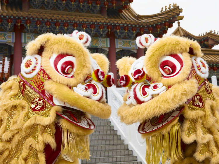 yellow lion dance at temple Celebration Gong Xi Fa Cai Good Luck Lion Dancers Lion Dance Performance Traditional Culture Animal Representation Chinese Lion Chinese New Year Costume Cultures Day Festive Lion Dance Opening Event Outdoors Performance Religious  Special Occasion