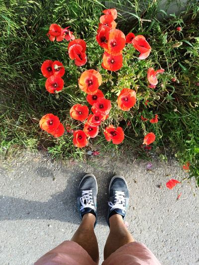 Summer Views Walking Around Taking Photos Enjoying Life Poppy Poppies  Flowers Nature Nature_collection Photography