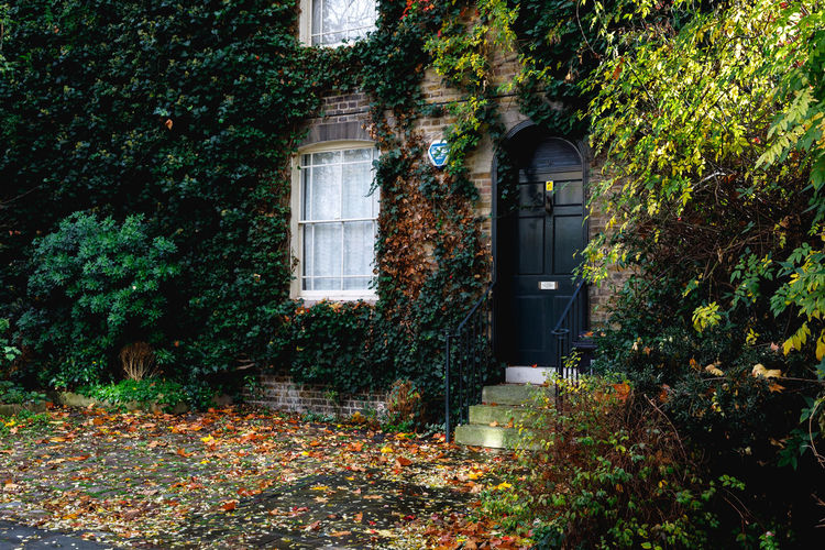 Autumn in London London Plant Architecture Built Structure Building Exterior Leaf Building Plant Part Nature No People Tree Door Entrance Outdoors Autumn Ivy Day Growth Window House Creeper Plant Change Autumn Travel Destinations Tranquility