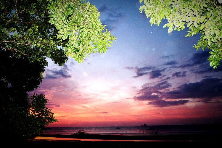 Sky Nature Beauty In Nature Landscape Outdoors Nature Photography Tranquility Naturephotography Beauty In Nature Naturephotolover Palawan Philippines Paradise Nature Water Beach Sea Tree Milky Way Galaxy No People Lake Scenics Star - Space Night Space
