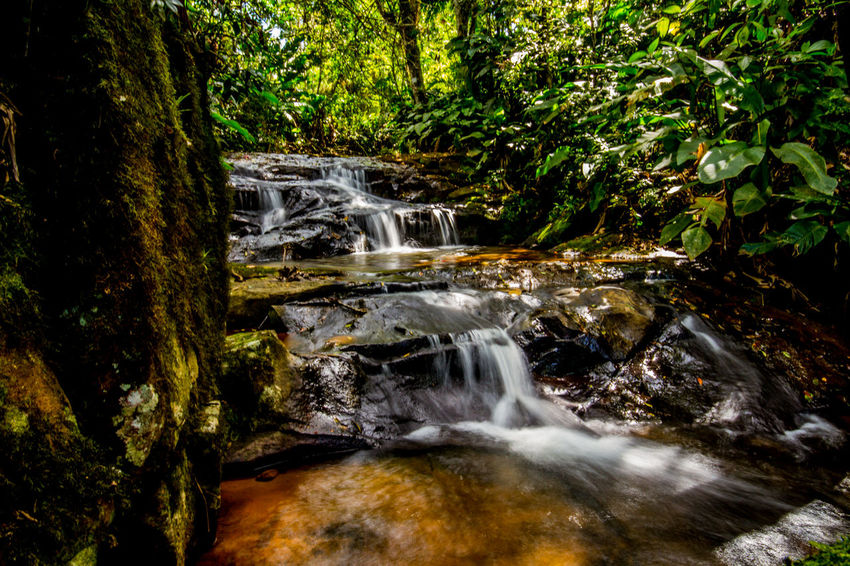Ecoturismo Meleiro, Brazil Turismo De Aventura Beauty In Nature Day Ecoturism Forest Growth Motion Nature No People Outdoors Scenics Tranquility Tree Water Waterfall