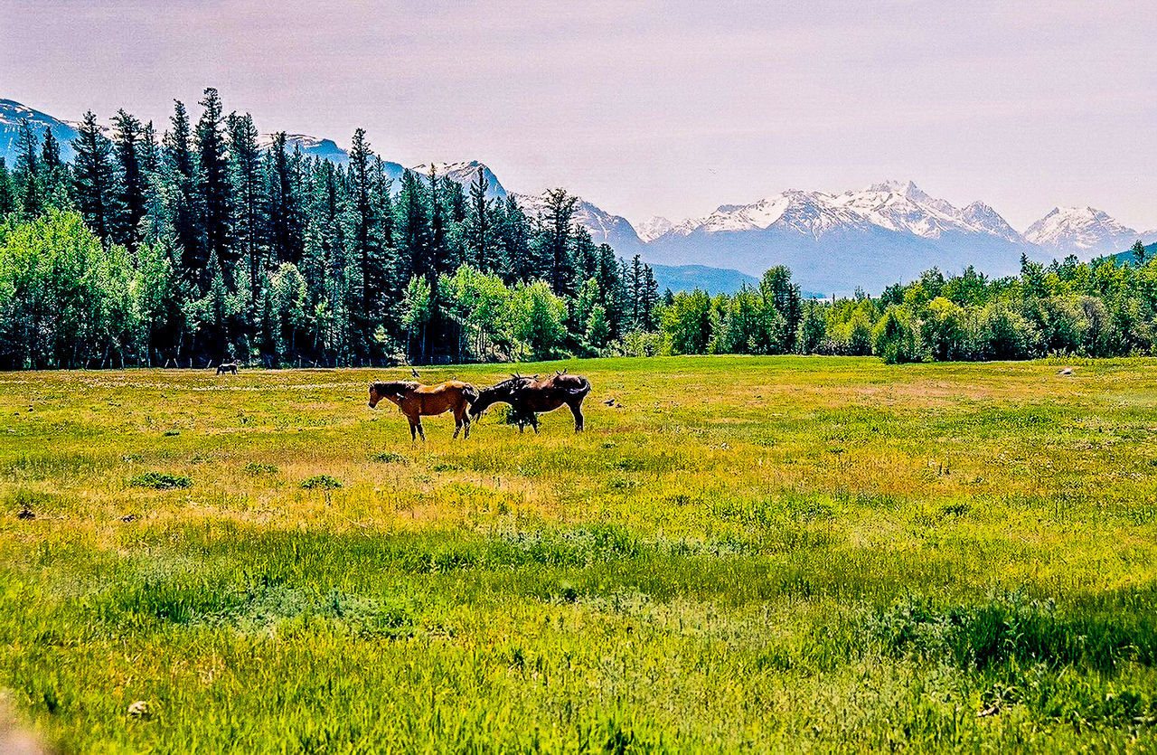 Domestic Animals Remote Nature Snowcapped Mountain Sky Landscape Mountain Range Outdoors Tranquility Mountain Clear Sky Snowcapped Tatlayoko Beauty In Nature British Columbia Majestic Scenics Horses Fields Field • The Great Outdoors – 2016 EyeEm Awards