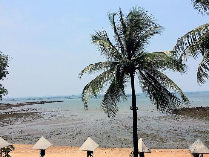 Sea Beach Sky Tree Simplicity Nature Hello World EyeEm Around The World We ❤️ Thailand Blue Wave