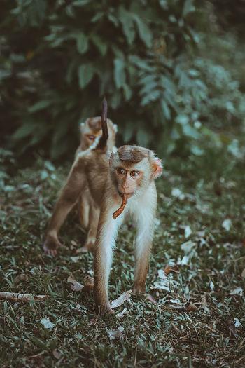 Monkeys in a field