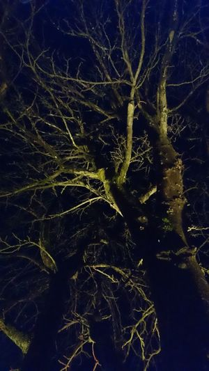 Close-up Illuminated Magic Light Magic Moments Mysterious Mysterious Place Mysteriously Nature Night Nightphotography No People Outdoors Tree Tree At Night Tree Branches Against The Sky Tree Illumination The Great Outdoors - 2017 EyeEm Awards
