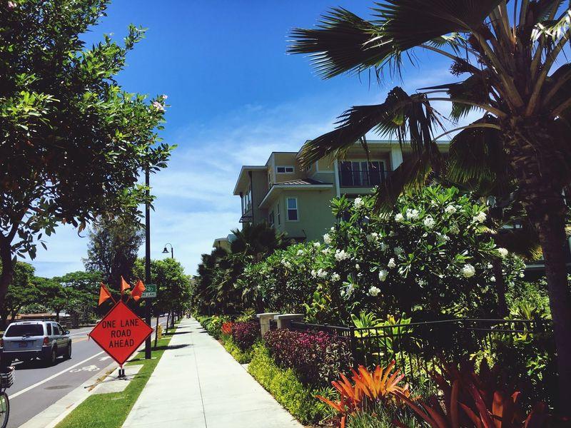雰囲気とかお店とか全部含めて、この街だいっっっすきになった😭💓 Kailua  Town Lanikai  Summer Sopretty