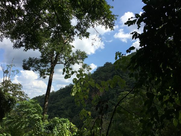 Beauty In Nature Branch Cloud - Sky Day Forest Freshness Green Color Growth Leaf Low Angle View Lush Foliage Mountain Nature No People Outdoors Plant Scenics Sky Tranquil Scene Tranquility Tree Tree Trunk