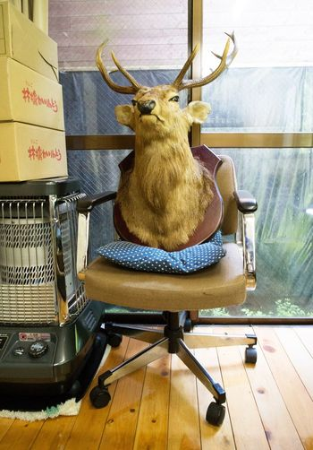 Antler Animal Themes Stuffed Animal Deer Chair Indoors  唐沢鉱泉 Chino 茅野 Nagano 長野 Japan