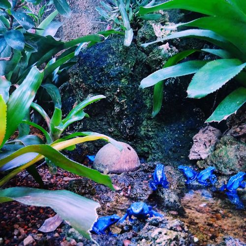 Okapipi Poison Dart Frog Amphibian EyeEm Nature Lover Nature_collection Nature Sold On Getty Images