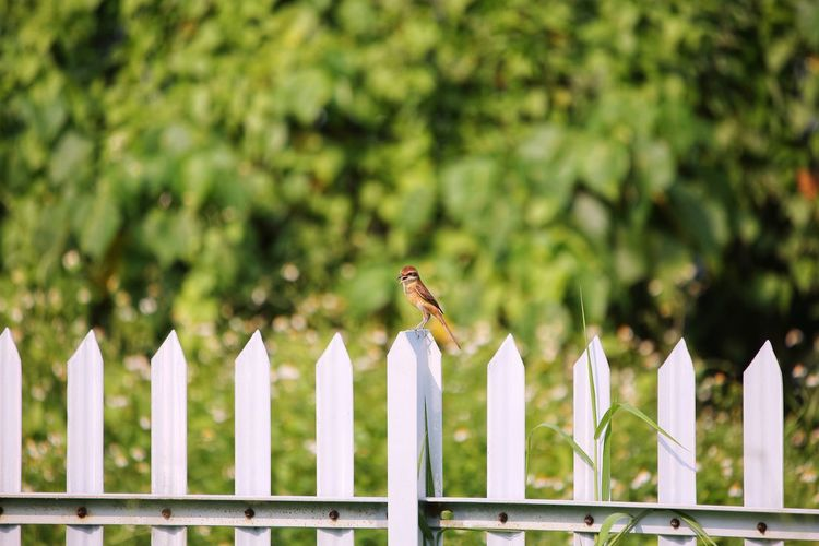 View of bird on wooden fence