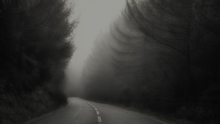 Road The Way Forward Direction Tree Transportation Fog Plant No People Tranquility Empty Road Nature Beauty In Nature Diminishing Perspective Day Empty Tranquil Scene vanishing point Outdoors Non-urban Scene Dividing Line Long