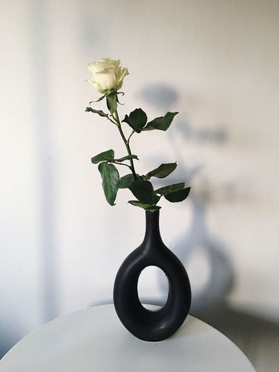 Close-up of small plant in vase