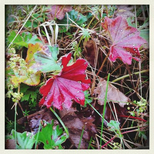 The colors of autumn. Colors Of Autumn Enjoying Life Nature In The Forest