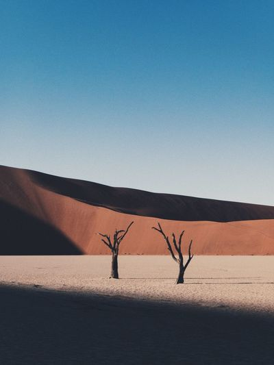 Bare trees on sand at desert against clear sky