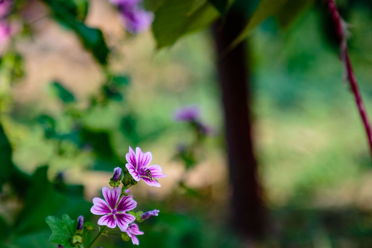 Henan Animal Themes Beauty In Nature Blooming China Close-up Day Flower Flower Head Focus On Foreground Fragility Freshness Growth Nature No People One Animal Outdoors Petal Plant Puyang Taiqian