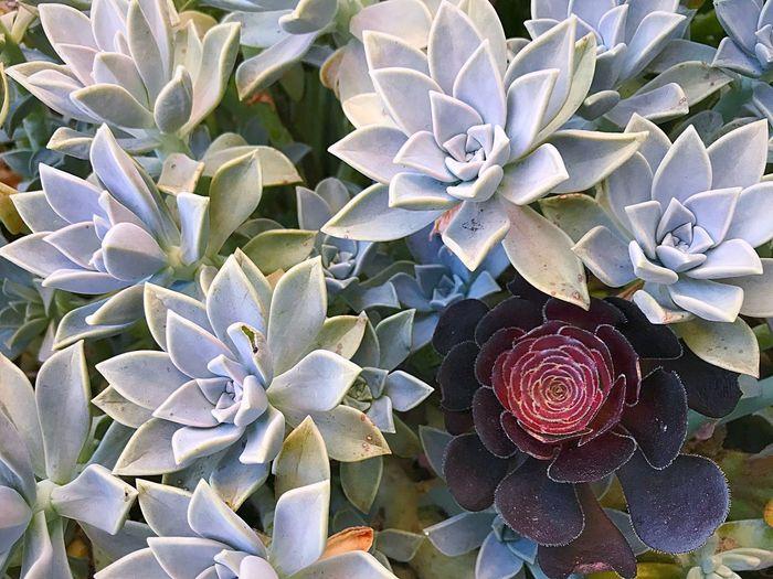 Full frame shot of flowers