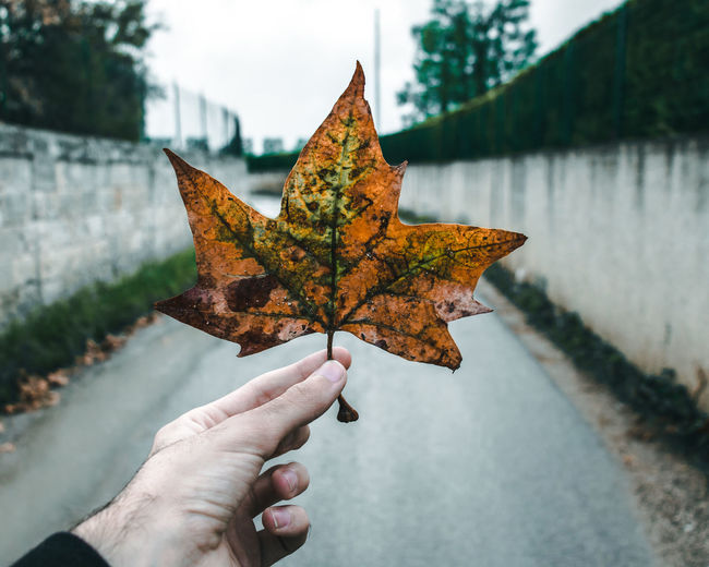 Autumn Beauty In Nature Change Close-up Day Dry Focus On Foreground Holding Human Body Part Human Hand Lake Leaf Maple Maple Leaf Nature One Person Outdoors Real People Sky Tree Water