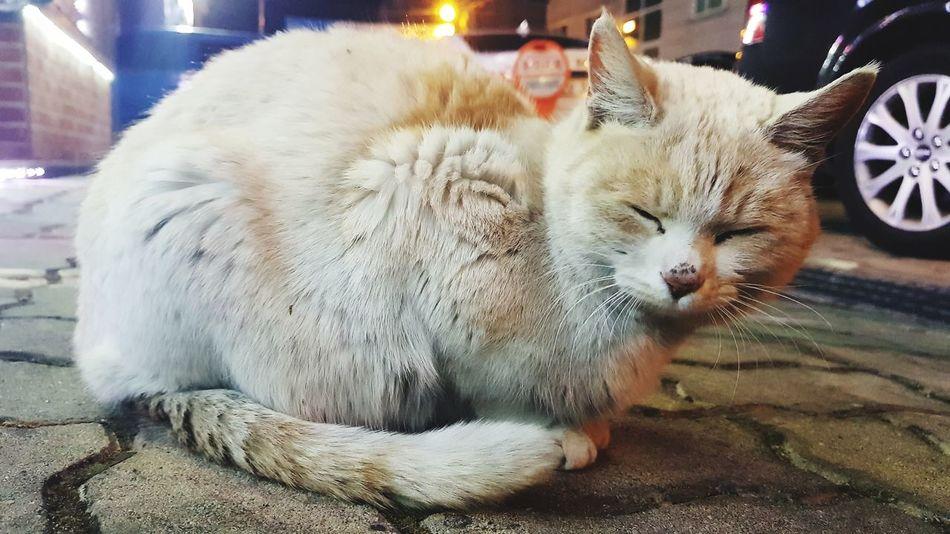 Cat Nyaoong