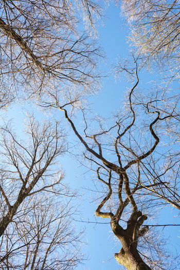Bare Tree Beauty In Nature Blue Branch Branches And Sky Branches Of Trees Clear Sky Day GERMANY🇩🇪DEUTSCHERLAND@ Hessen Low Angle View Nature No People Outdoors Scenics Sky Tranquility Tree Wide Angle Wiesbaden, Germany