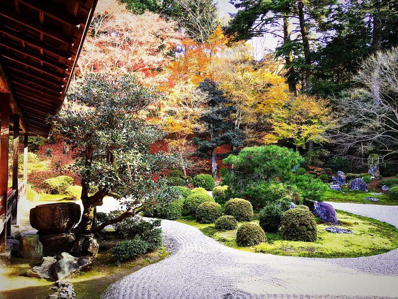 曼殊院 曼殊院門跡 京都 Kyoto Beauty In Nature Japanese Garden Travel Destinations Japanese Garden Kyoto Autumn Autumn Colors Autumn Relaxing Kyoto, Japan Hello World Enjoying Life
