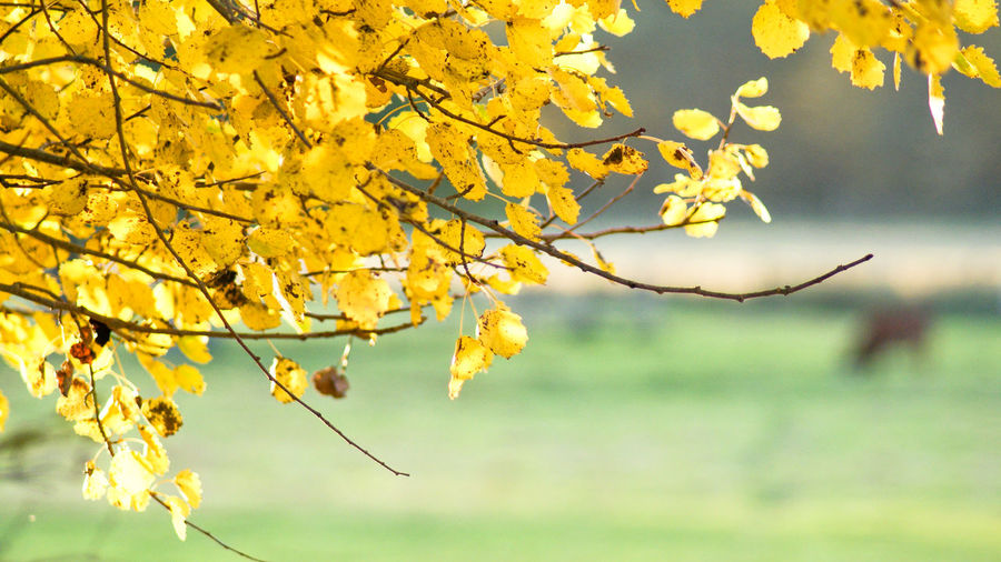 Autumn Background Background Defocus Background Photography Backgrounds Beauty In Nature Branch Change Close-up Day Flower Focus On Foreground Fragility Freshness Growth Leaf Nature No People Outdoors Tree Yellow