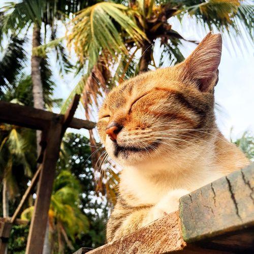 Tropical Cat Cat Pet Palms