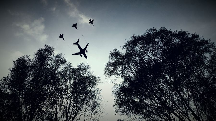 Bird Tree Flying Spread Wings Togetherness Mid-air Bird Of Prey Silhouette Flock Of Birds Motion Fighter Plane Military Airplane US Air Force US Navy Air Force Formation Flying Airshow Air Vehicle