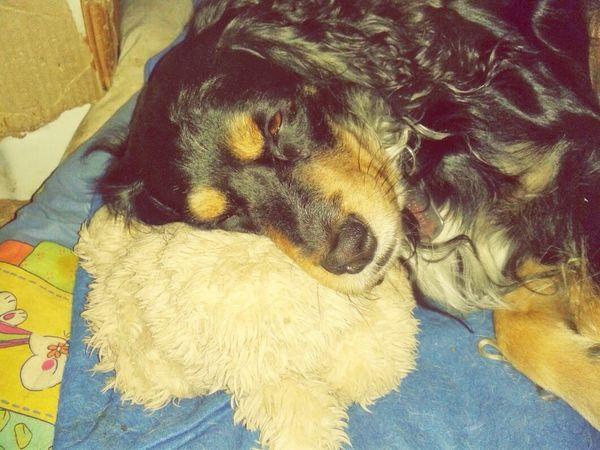 Mi Angelito guapo Perro Cachorro Adoptanocompres