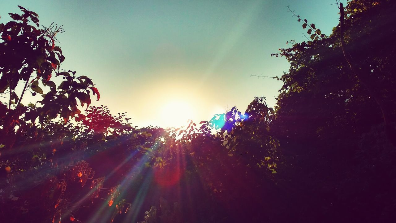 lens flare, tree, sun, nature, sunlight, sunbeam, growth, beauty in nature, outdoors, no people, tranquility, low angle view, sky, sunset, scenics, day, close-up, freshness