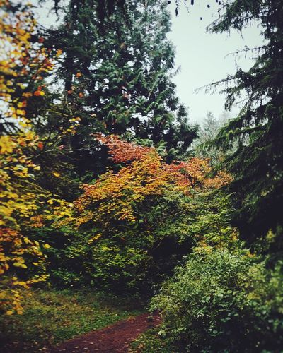 Sunday Stroll. Walking Around Arboretum Hoyt Arboretum Oregon PNW Autumn