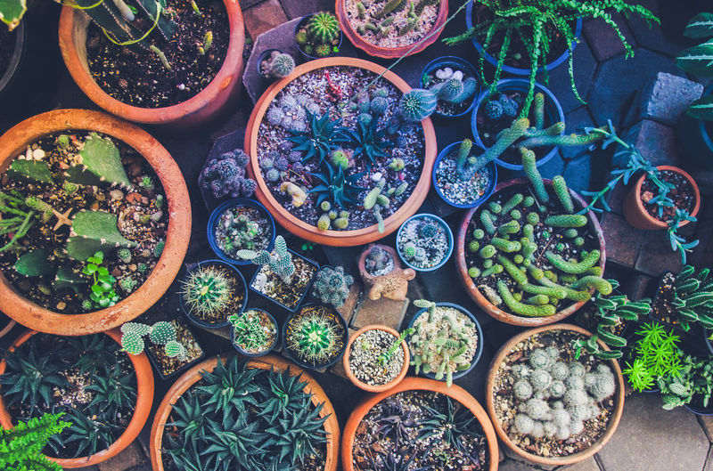 High angle view of potted plants for sale at market