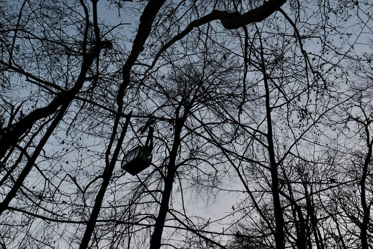 Dancing Trees Abstract Photography Cable Railway Jacklycat©2018 Shades Of Winter Cable Funicolare Nature Silhouette Sky Tree