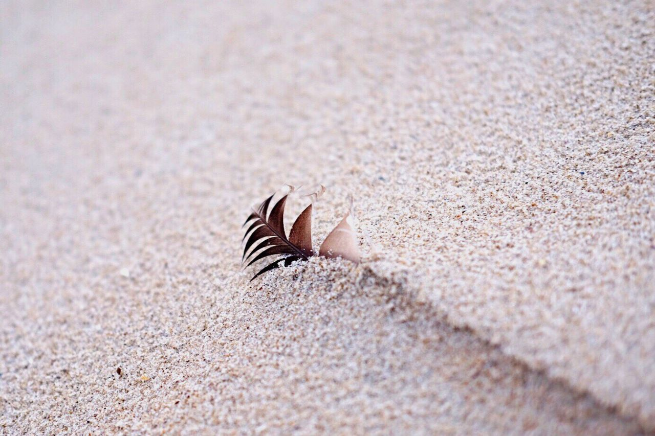 sand, beach, one animal, animal themes, day, animals in the wild, nature, sea life, close-up, selective focus, hermit crab, animal wildlife, outdoors, seashell, no people, sea