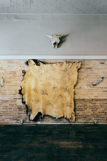 EyeEm Selects EyeEm Selects Wall - Building Feature Animal Skull Taxidermy No People Hanging Built Structure Indoors  Day Architecture Animal Themes Rotting Close-up Mammal