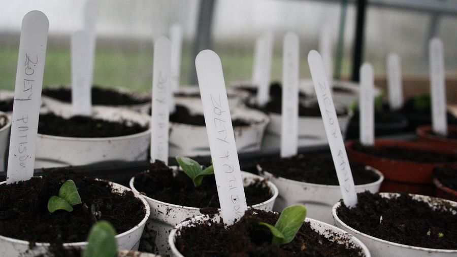 Close-Up Of Potted Plants With Labels At Greenhouse