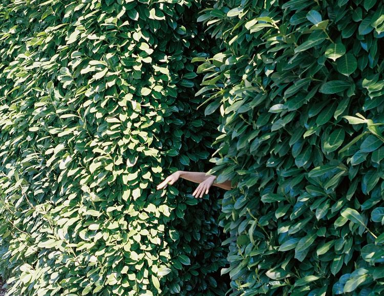 Hands Hanging Pentax K1000 Film Photography Streetphotography Portland Portra Springtime Withlove Plant Green Color Growth Ivy Nature Day Outdoors Beauty In Nature No People Fragility Freshness Close-up