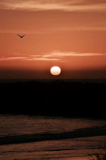 Bird flying over sea against sky at sunset