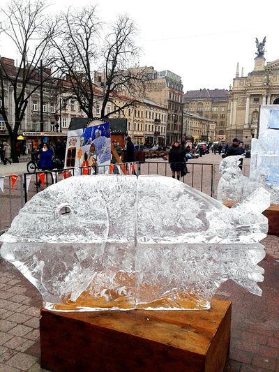 Ukraine L'vivIce Fish Monuments Exbititon City Design Taking Photos Enjoying Life