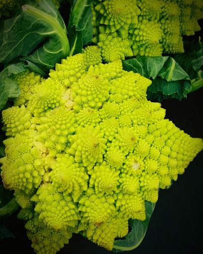 Italian Cauliflower Green Green Color Greenery Vegetable Vegetables Vegetarian Food Vegetarian Vegetables & Fruits Vege Black Background Nature Green Color Leaf Day Freshness Beauty In Nature No People
