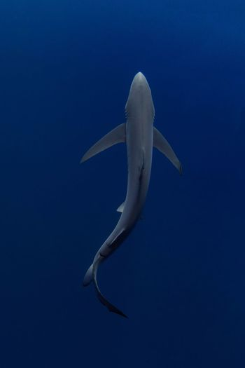 View of shark in sea