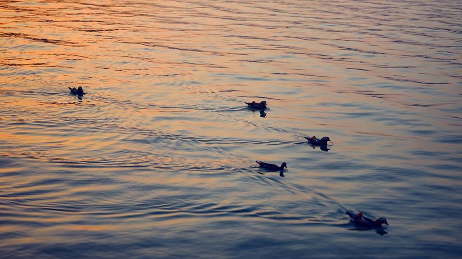 a late afternoon at summer palace. Animal Themes Animals In The Wild Beauty In Nature Ducks Ducks At The Lake Lake Nature Nature Nature Photography Nature_collection Outdoors Summer Palace Sunset Sunset Silhouettes Sunset_collection Sunsetlover Water