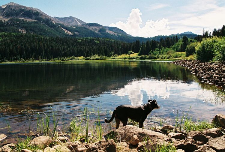 Side view of a dog in front of calm countryside lake